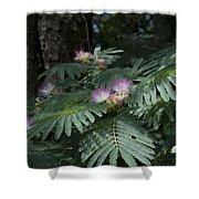 Beautiful Alabama Mimosa Silk Tree Shower Curtain