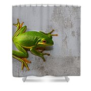 Beautiful American Green Tree Frog On Grunge Background  Shower Curtain