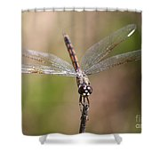 Beautiful Brown Eyes Shower Curtain