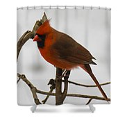 Beautiful Cardinal Shower Curtain