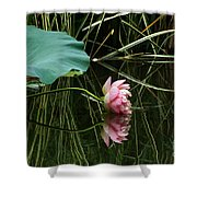 Beautiful Fallen Lotus Shower Curtain
