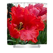 Beautiful From Inside And Out - Parrot Tulips In Philadelphia Shower Curtain