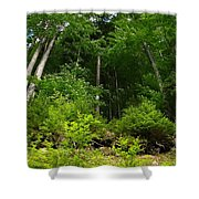 Beautiful Green Shower Curtain