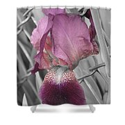 beautiful Iris Shower Curtain