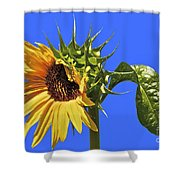 Beautiful Moves In Curves Shower Curtain
