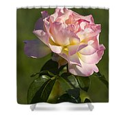 Beautiful Pink And Yellow Climbing Peace Rose Shower Curtain