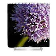 Beautiful Purple Flower Allium Senescens Shower Curtain