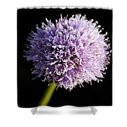 Beautiful Purple Flower With Black Background Shower Curtain
