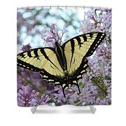 Beautiful Swallowtail Shower Curtain