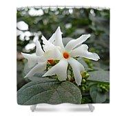 Beautiful White Flower With Orange Center Shower Curtain