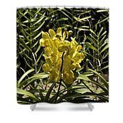 Beautiful Yellow Flowers Inside The National Orchid Garden In Si Shower Curtain