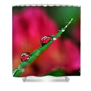 Beauty After The Rain Shower Curtain