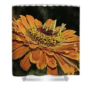 Beauty In Orange Petals Shower Curtain
