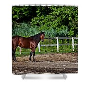 Beauty Of A Horse Shower Curtain