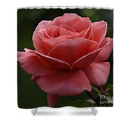 Beauty Of A Rose Shower Curtain