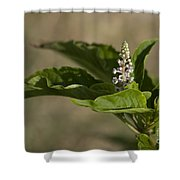 Beauty Of A Wildflower Shower Curtain