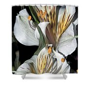 Beauty Untold Shower Curtain