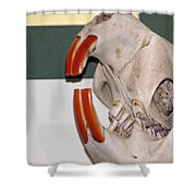 Beaver Teeth Shower Curtain