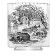 Beavers Shower Curtain