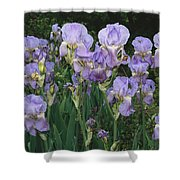 Bed Of Irises, Provence Region, France Shower Curtain