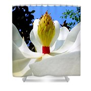 Bed Of Magnolia Shower Curtain