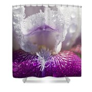 Bedazzled Purple And White Iris Shower Curtain