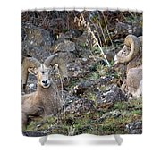 Bedded Pair Shower Curtain