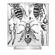 Bee Anatomy Historical Illustration Shower Curtain