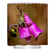 Bee Beetle Shower Curtain