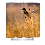 Bee Eater With Insect Shower Curtain