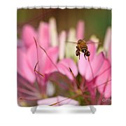 Bee In Flight Over Cleome Flower Shower Curtain