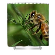 Bee In Green Shower Curtain