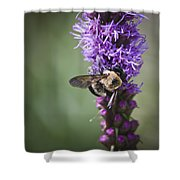 Bee On Gayfeather Squared 1 Shower Curtain