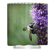 Bee On Gayfeather Shower Curtain