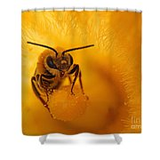 Bee On Squash Flower Shower Curtain