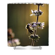 Bee On The Basil Shower Curtain