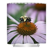 Bee Resting Squared Shower Curtain