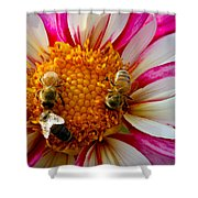 Bee Time Shower Curtain