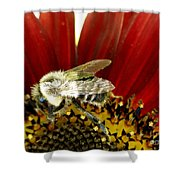 Bee Tip Toes Shower Curtain