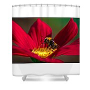 Beebot Shower Curtain