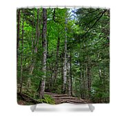 Beech Mountain Trail Acadia Shower Curtain