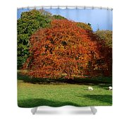 Beech Tree, Glendalough, Co Wicklow Shower Curtain