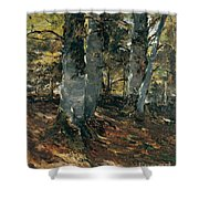 Beechwoods At Polling Bavaria Shower Curtain