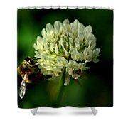 Beeflower2 Shower Curtain