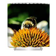Beeing Healthy With Echinacea Pow Wow Shower Curtain