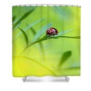Beetle Butt Shower Curtain
