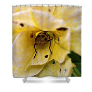 Beetle In Yellow Flower Shower Curtain