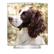 Before The Hunt - English Springer Spaniel Shower Curtain