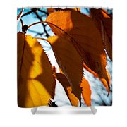 Before The Leaves Fall Shower Curtain