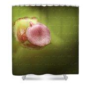 Begonia Bud Shower Curtain